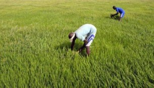 0407-30355-agriculture-ouest-africaine-il-faudra-s-integrer-ou-mourir-rapport_L